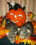 Sweet ratties Jailene and Jacob